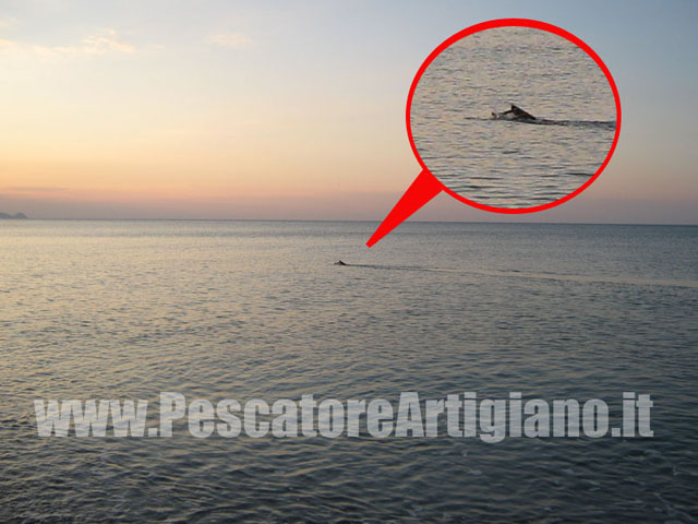 pescatoreartigiano.it
